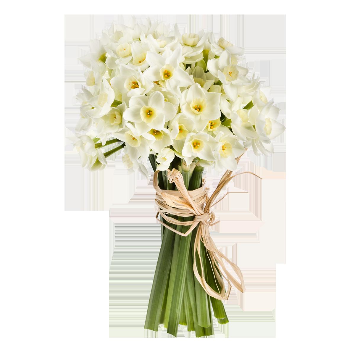 Доставка цветов спб гортензии