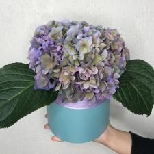 Цветы в шляпной коробке 1619