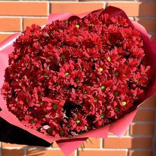 Букет из бордовых ромашковых хризантем 1981
