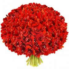 Букет из красных амариллисов (гиппеаструмов)