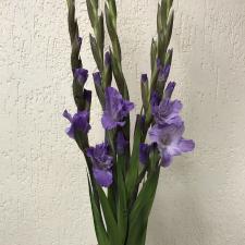 Букет из фиолетовых гладиолусов