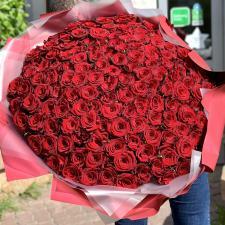 Букет из 151 красной розы (80 см) 388