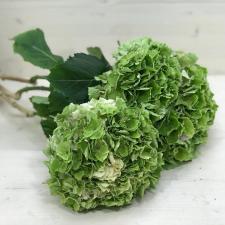 Букет зеленых гортензий